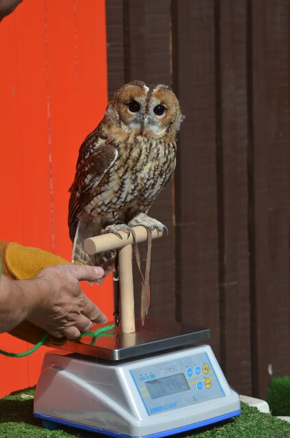 Owl on WBW Washdown Scale